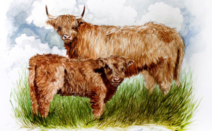 Highland Cow Photography Based Watercolor Portrait