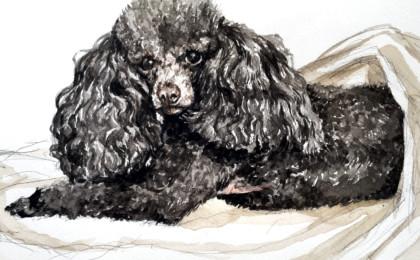 Teacup Poodle Photography Based Watercolor Portrait